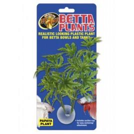 Zoomed betta plant papaya