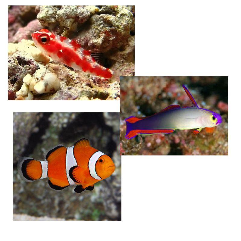 lot de poissons marins n 176 1 quot pour nano aquarium r 233 cifal de 60 litres quot poisson d or sa