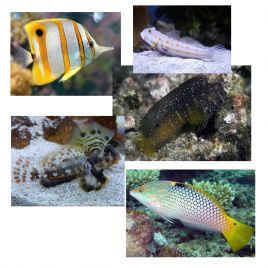 """Lot de poissons marin N°7 :""""Utilitaires aquarium récifal"""""""