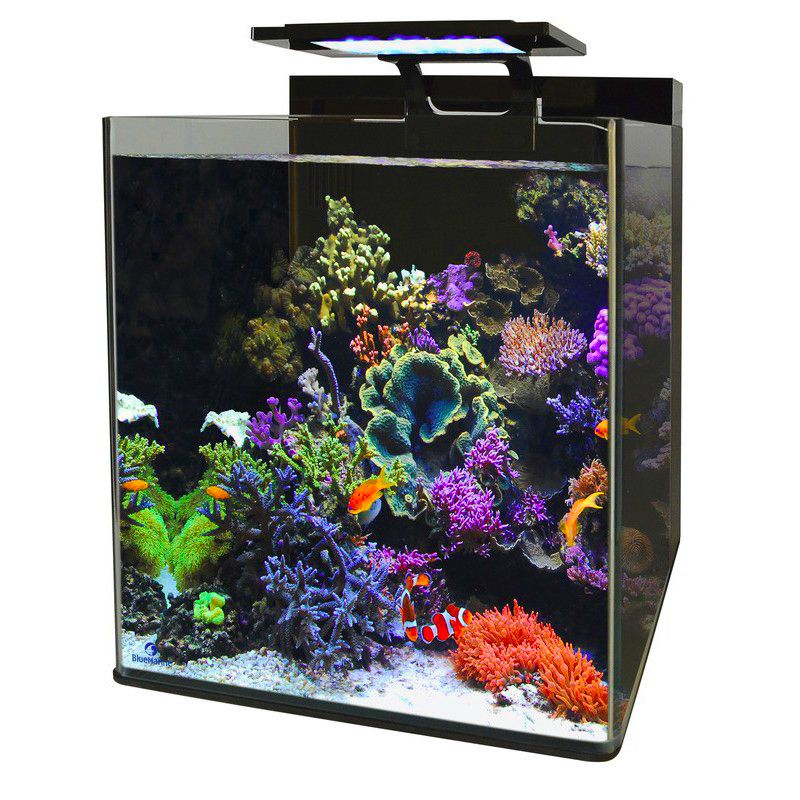 blue marine reef 60 aquarium poisson d 39 or sa. Black Bedroom Furniture Sets. Home Design Ideas