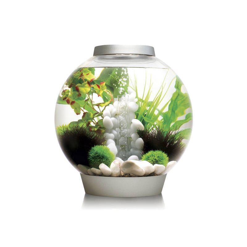 Oase biorb classic 30 mcr argent poisson d 39 or sa for Terreau aquarium