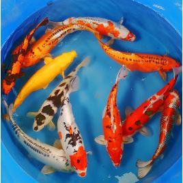 Vente en ligne aquariophilie - Poisson d\'Or - Poisson d\'Or SA