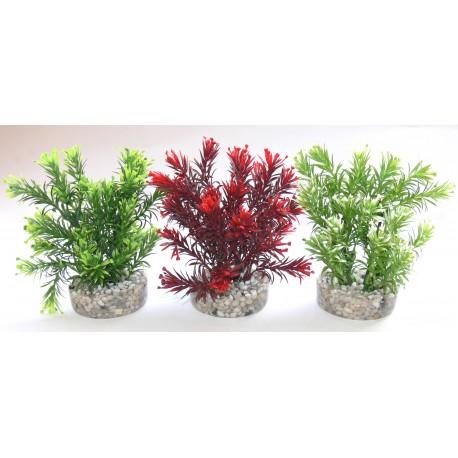Plante jungle small 15cm 349633 poisson d 39 or sa for Plante jungle