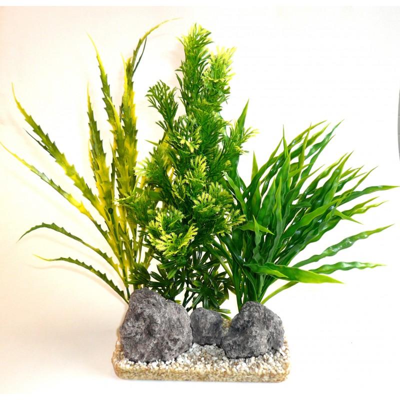 plante aloe vera giant poisson d 39 or sa. Black Bedroom Furniture Sets. Home Design Ideas