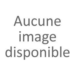 ACORUS calamus Variegatus (Feuillage panaché)